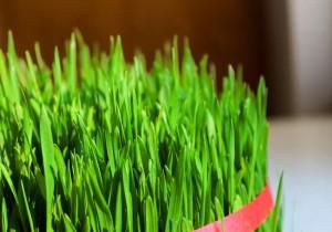 weizengrassaft ein gesundes superfood aus dem entsafter entsafter test. Black Bedroom Furniture Sets. Home Design Ideas