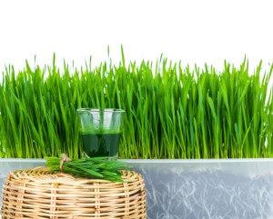 Weizengrassaft